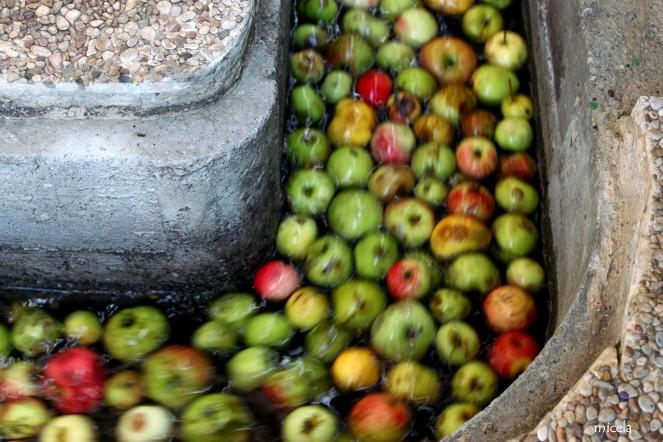 lavado-manzanasm