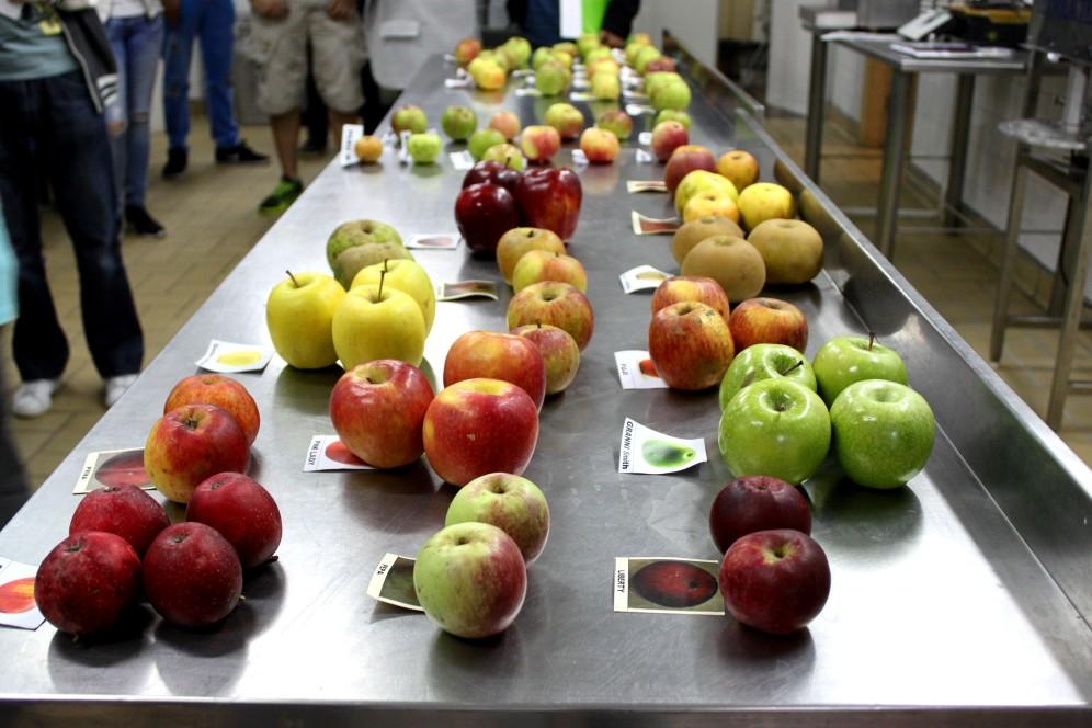 muestra-de-manzanas